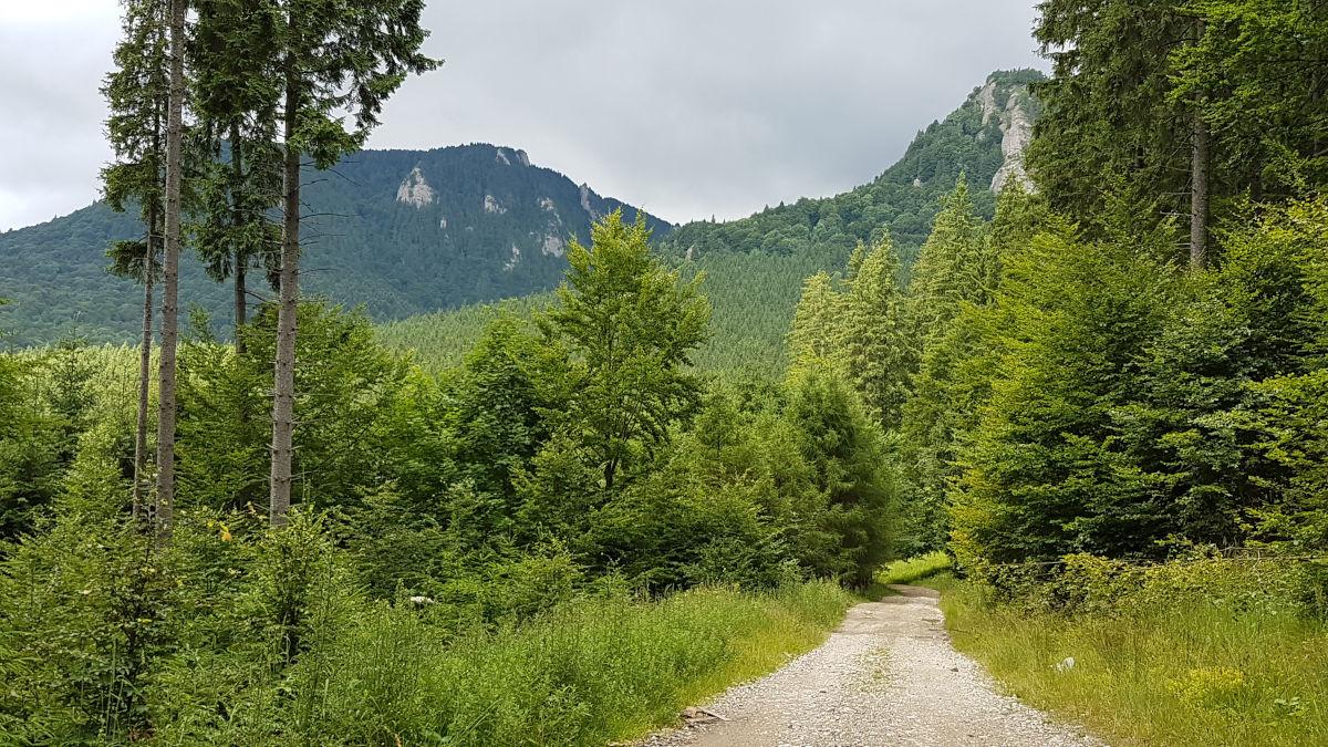 Culmea Zăganu văzută din Valea Stânii