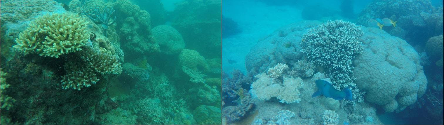 Two frames of video - one is very green while the other is more blue. An effect of the Auto White Balance