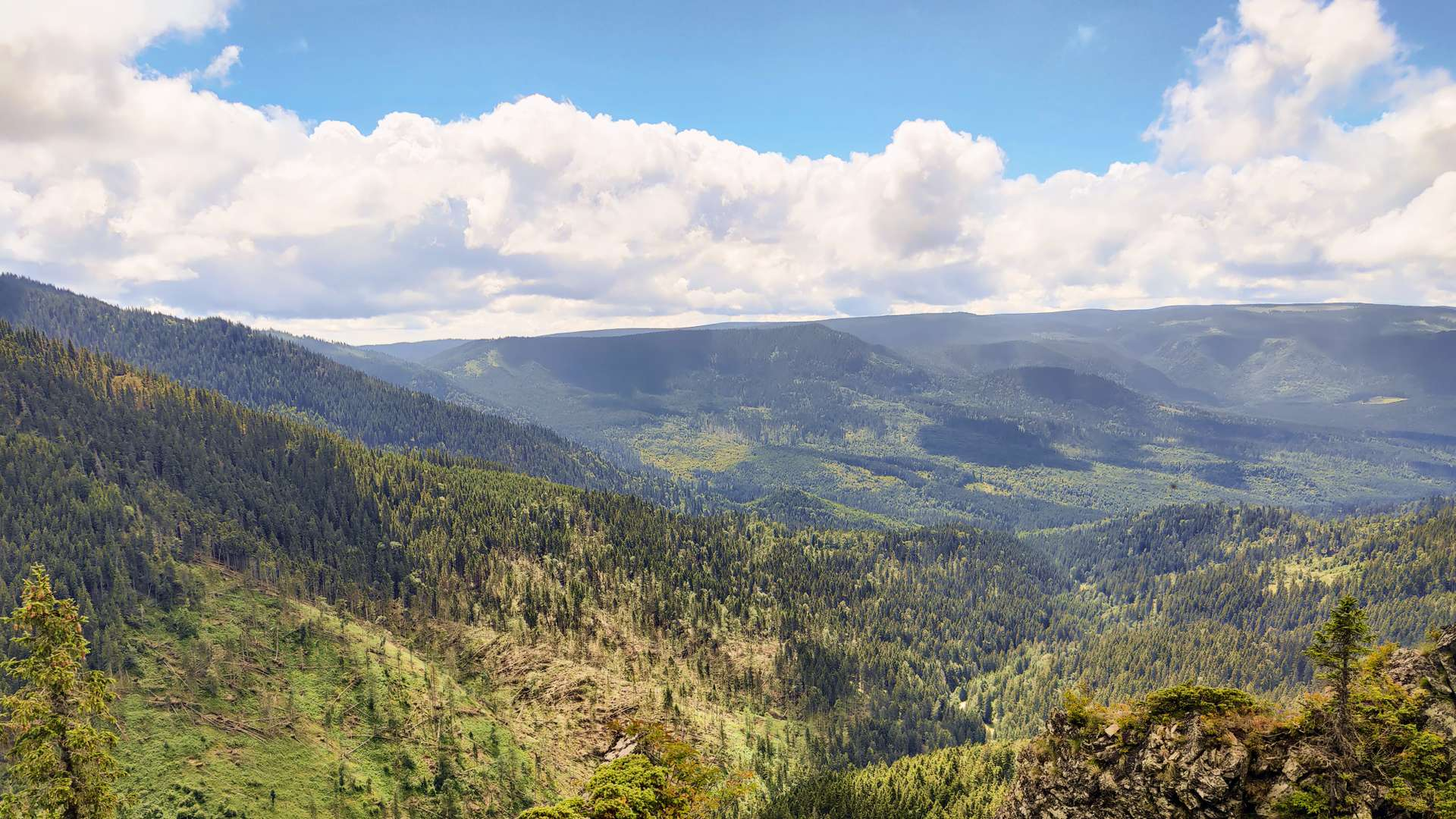 natura-munte padure frumos