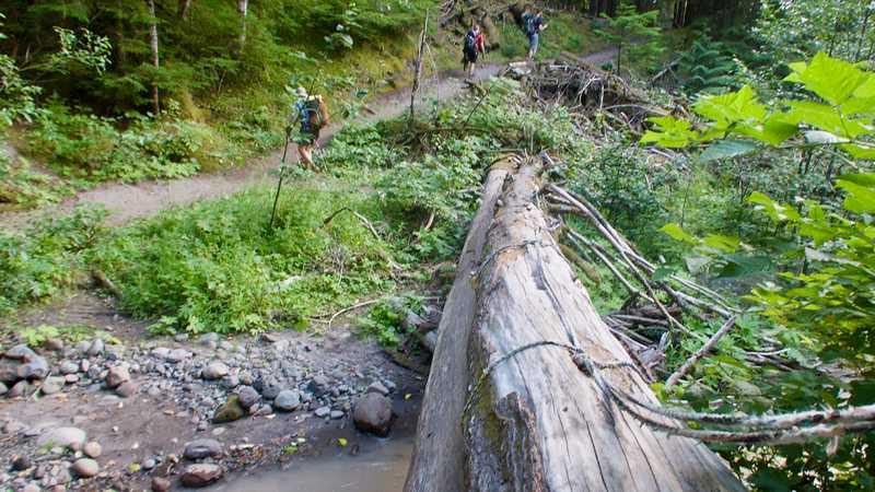 Logs crossing Muddy Fork