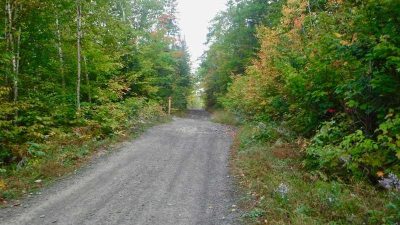 Loggin road