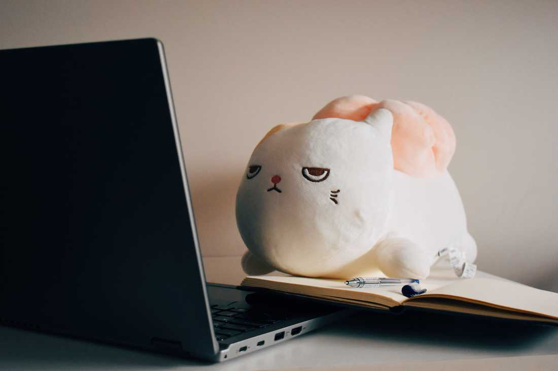white rabbit plush beside macbook photo