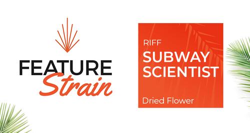 Subway Scientist Strain (Dried Flower)