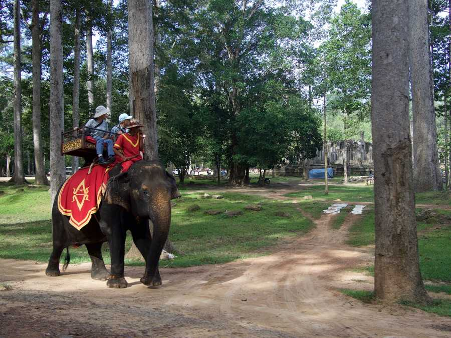 Elephant rides are available to tourists