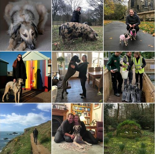 2019 highlights and what we've learnt after 2 years of full time housesitting
