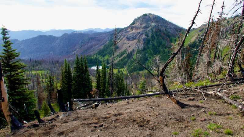 A burnt section near Norse Peak