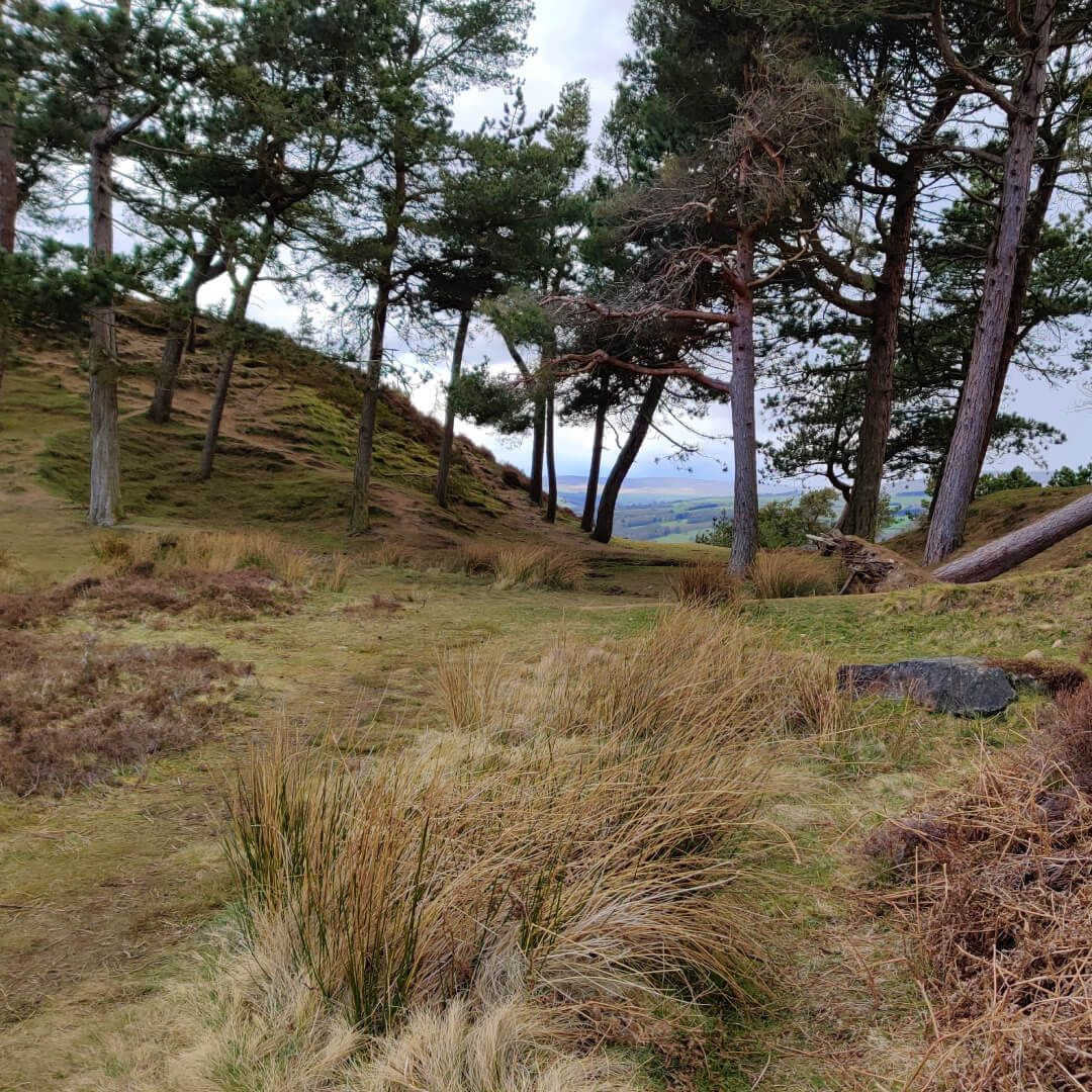 Ilkley Moor trees