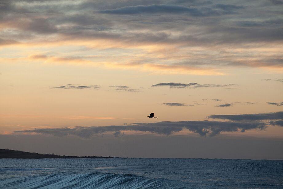 Marane Sky 1-7f5506.jpg