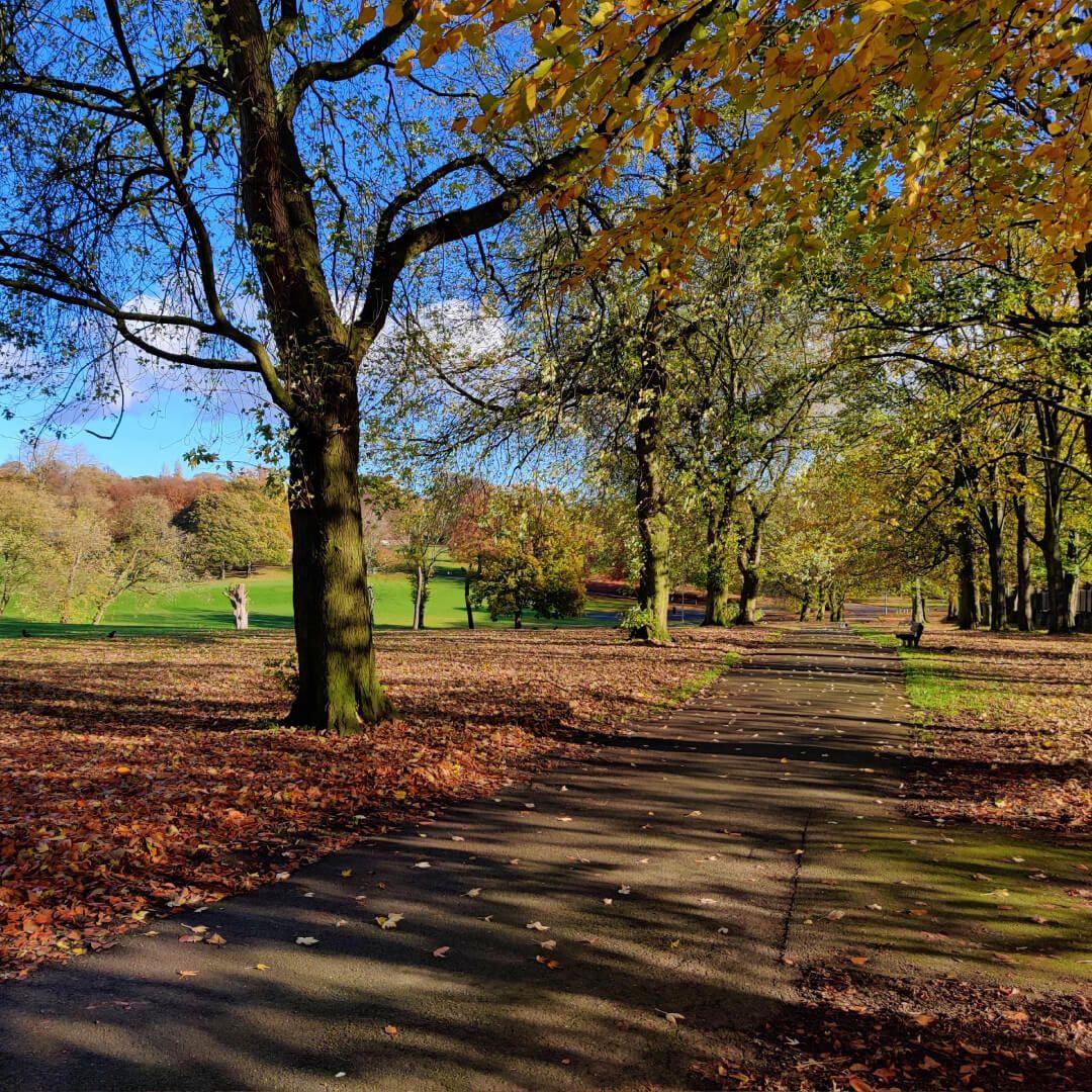 Path under trees Potternewton Park in Autumn