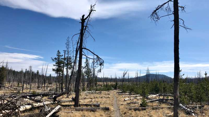 A burnt section of trail in Lassen Volcanic National Park