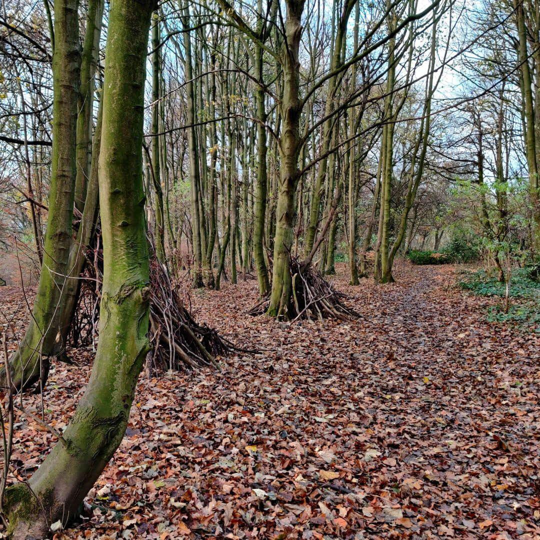 Beckett Park Woods