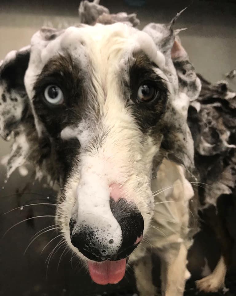 dog shampoo and grooming