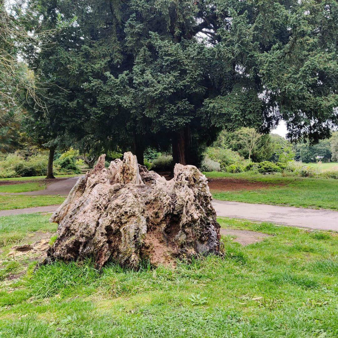 Horsforth Hall Park old tree stump