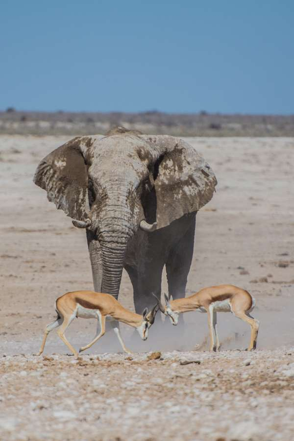 Wildlife - Hidde Rensink