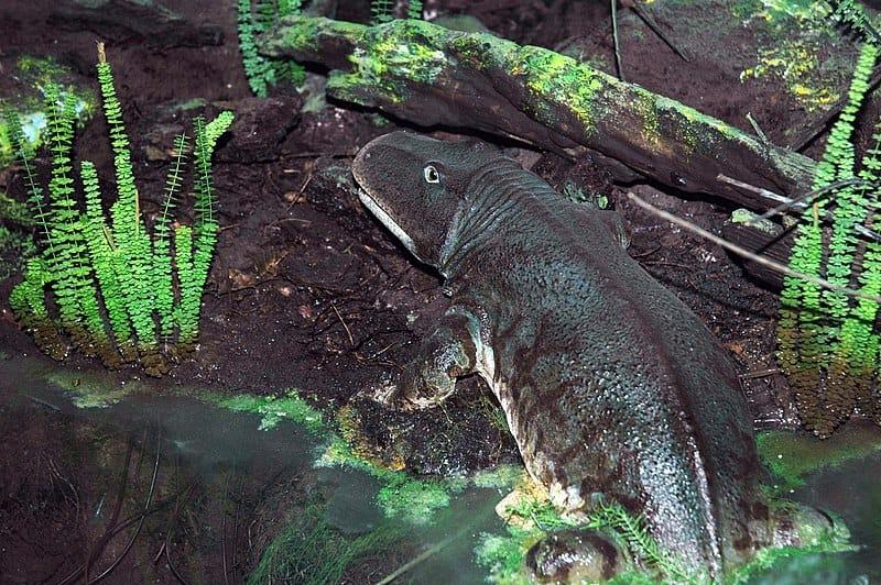 Reconstrução baseada na vida no solo de uma floresta do Permiano, com um Eryops sendo representado. Esta é uma exposição pública no Carnegie Museum of Natural History em Pittsburgh, Pensilvânia.