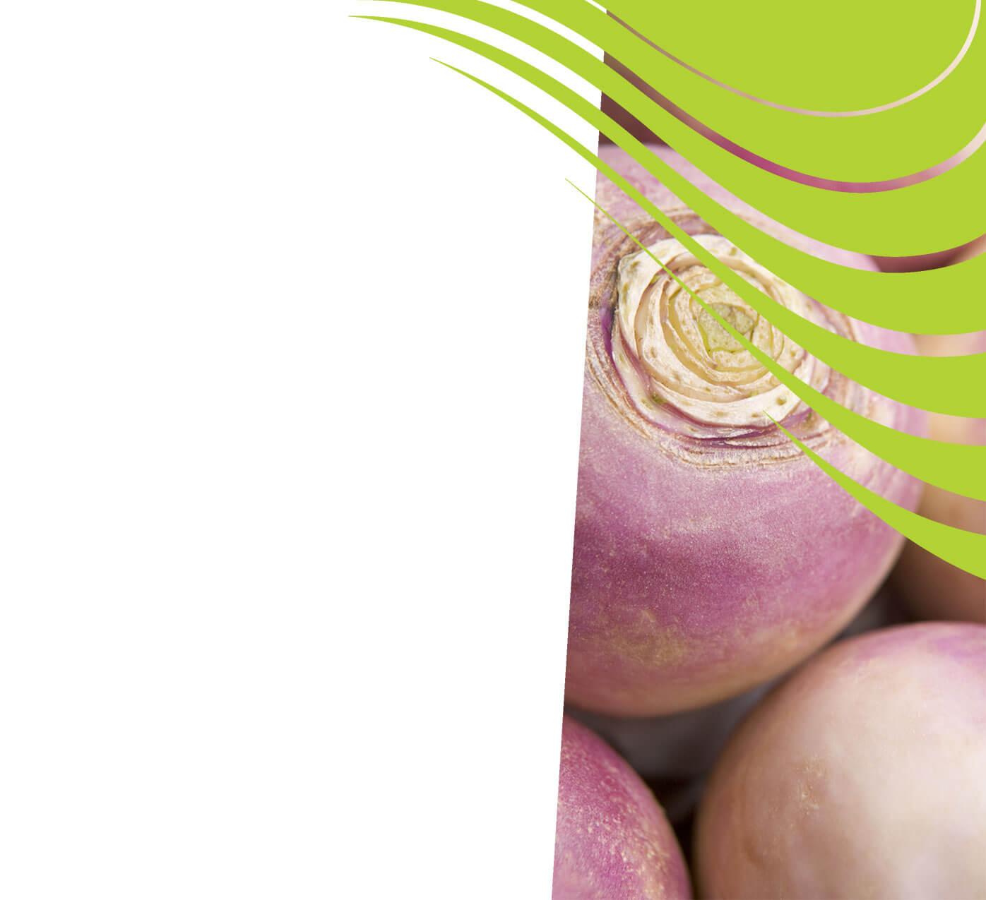 fertiliser for turnips