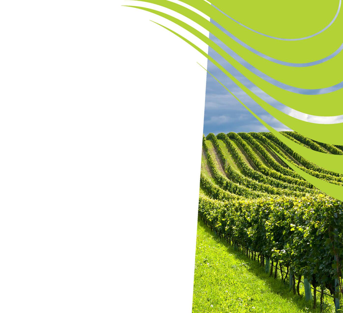 fertiliser for vineyard wine grapes