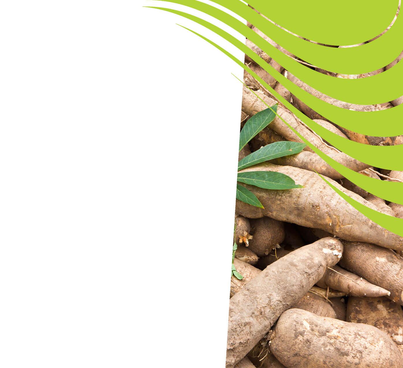 fertiliser for cassava