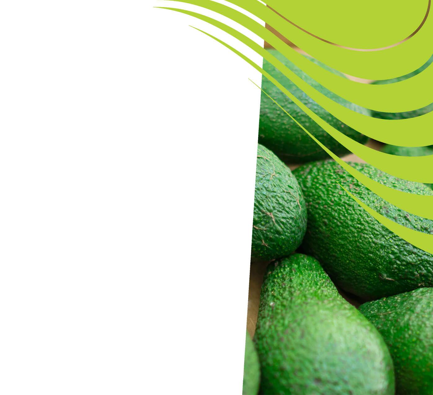 fertiliser for avocados