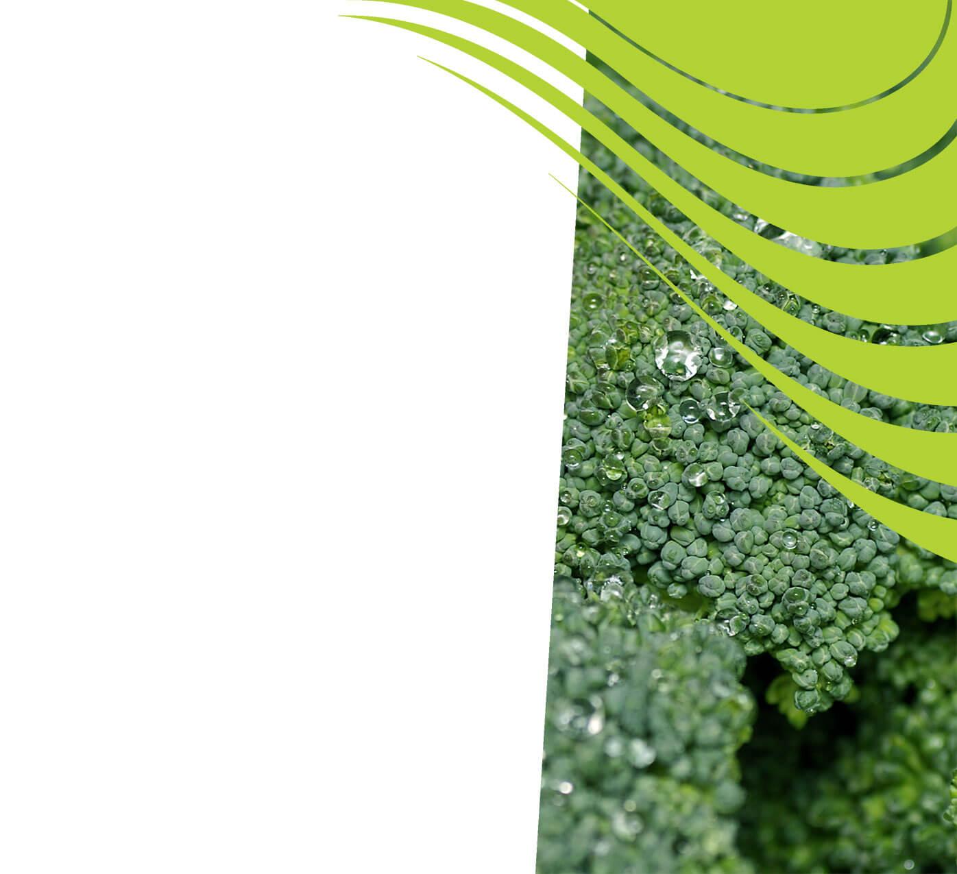 fertiliser for broccoli