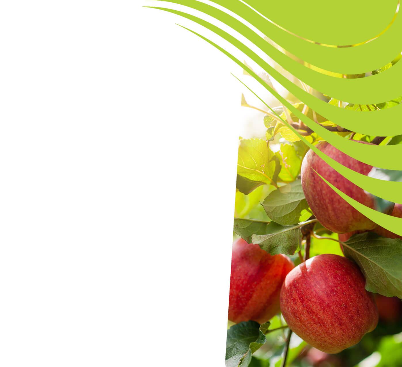 fertiliser for apples