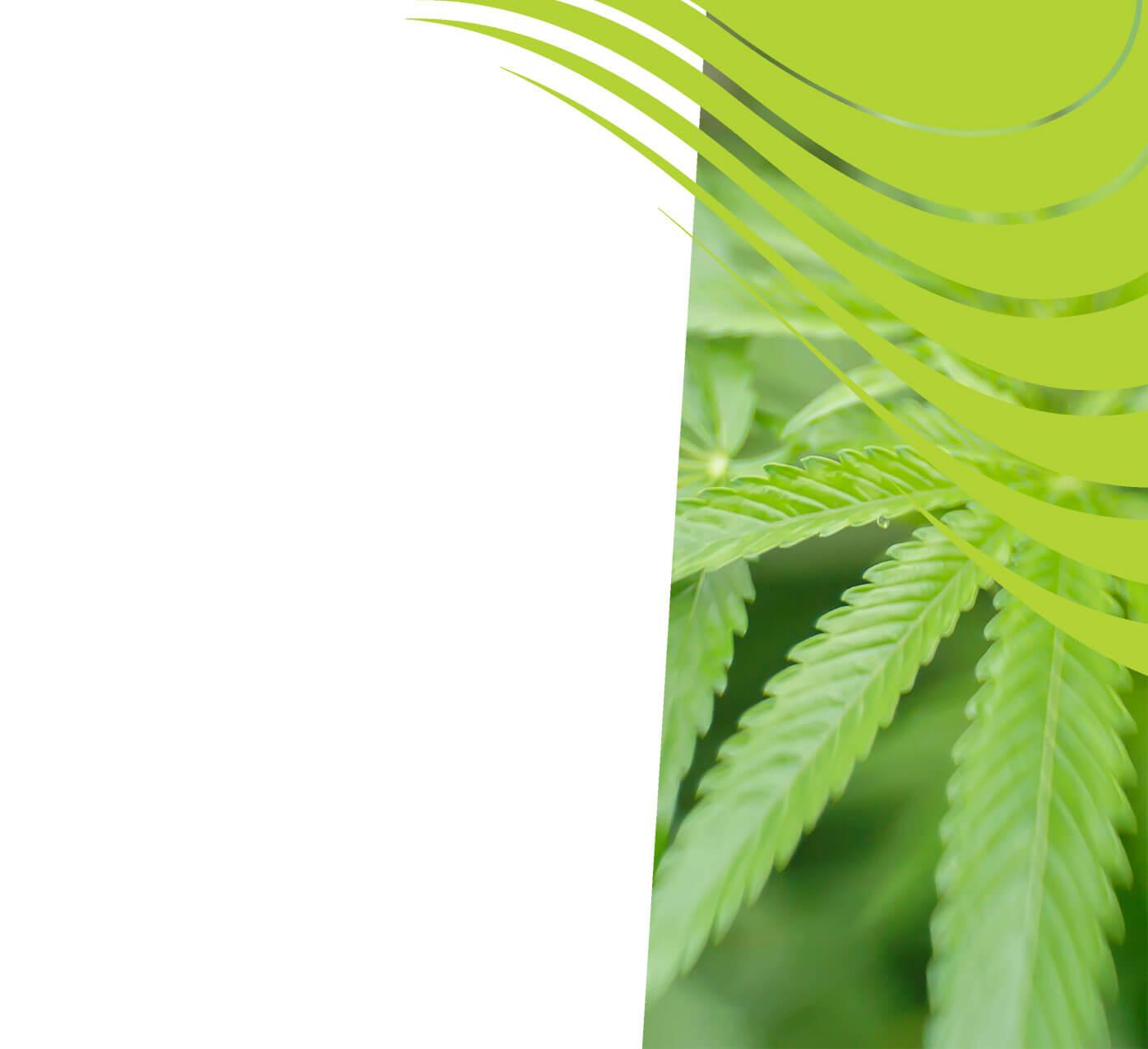 fertiliser for hemp
