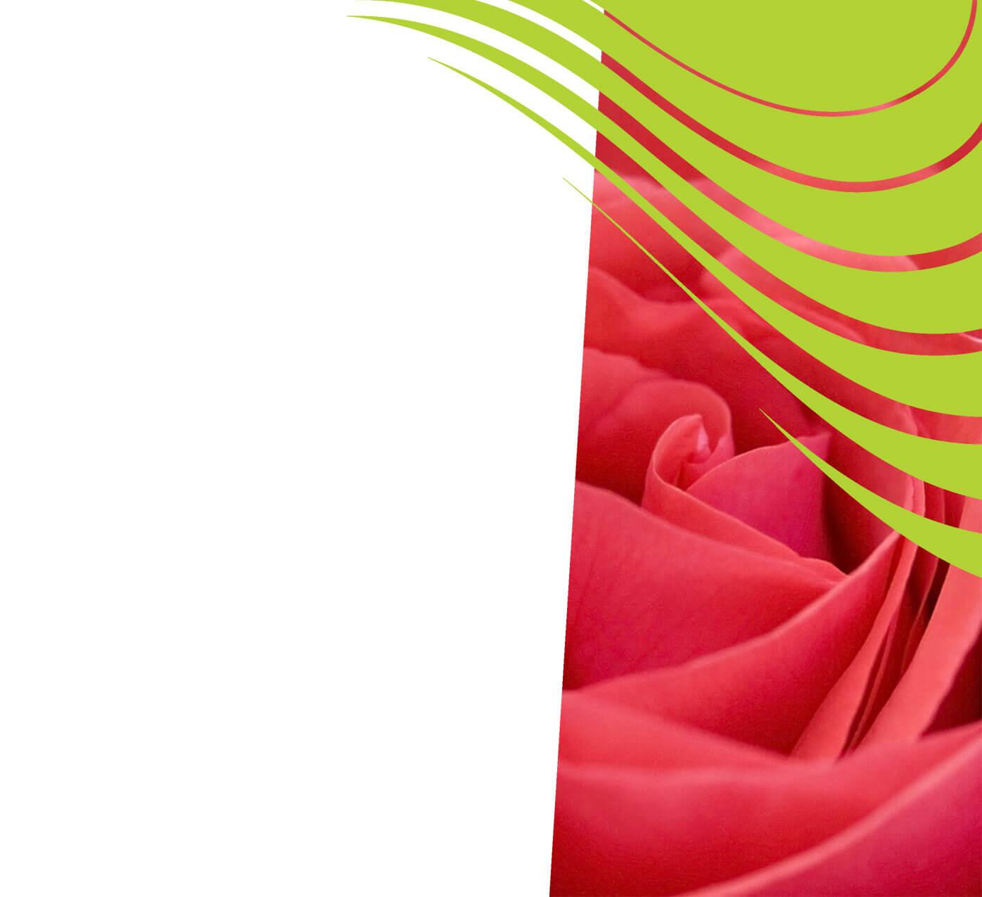 fertiliser for roses