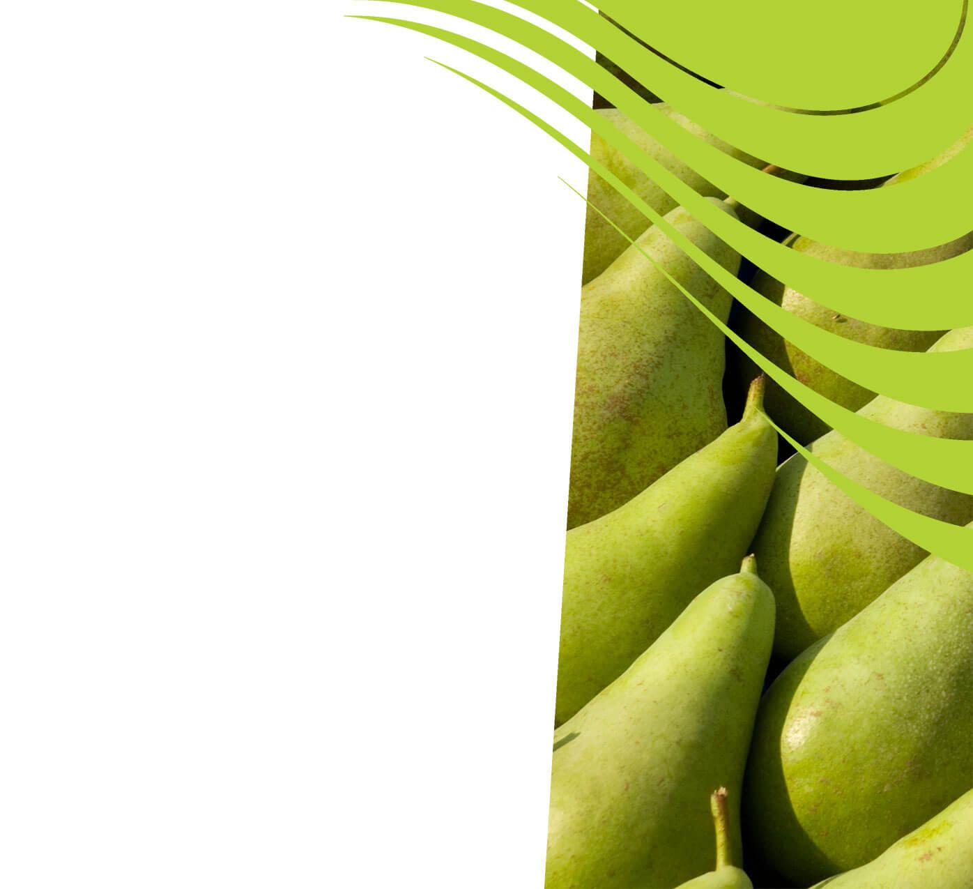 fertiliser for pears