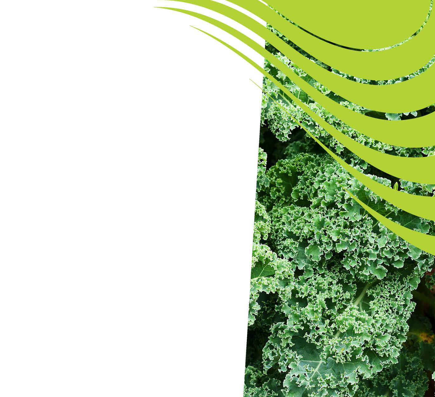 fertiliser for kale