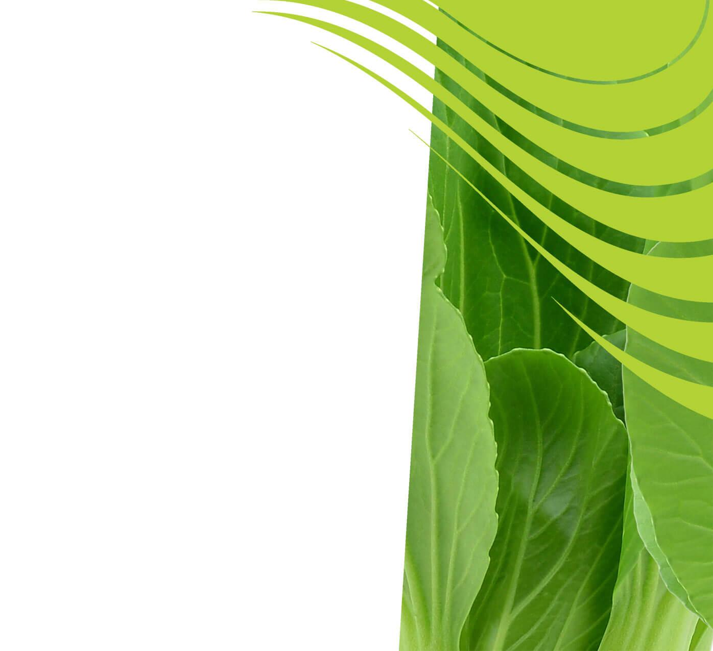 fertiliser for pak-choi