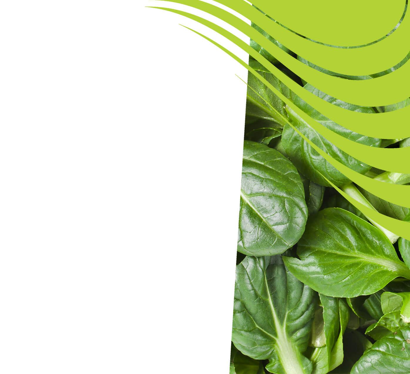 fertiliser for spinach