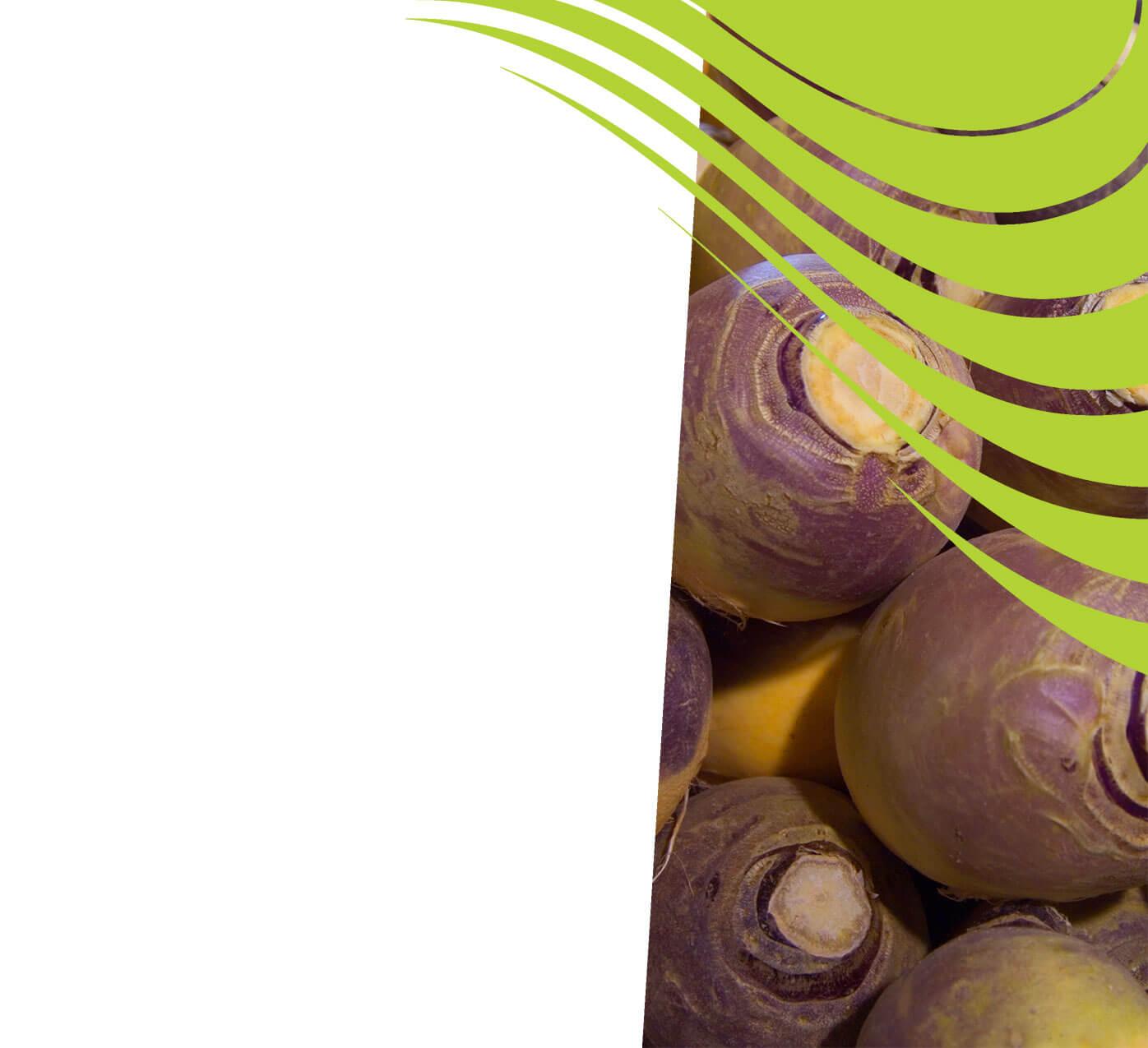 fertiliser for rutabagas