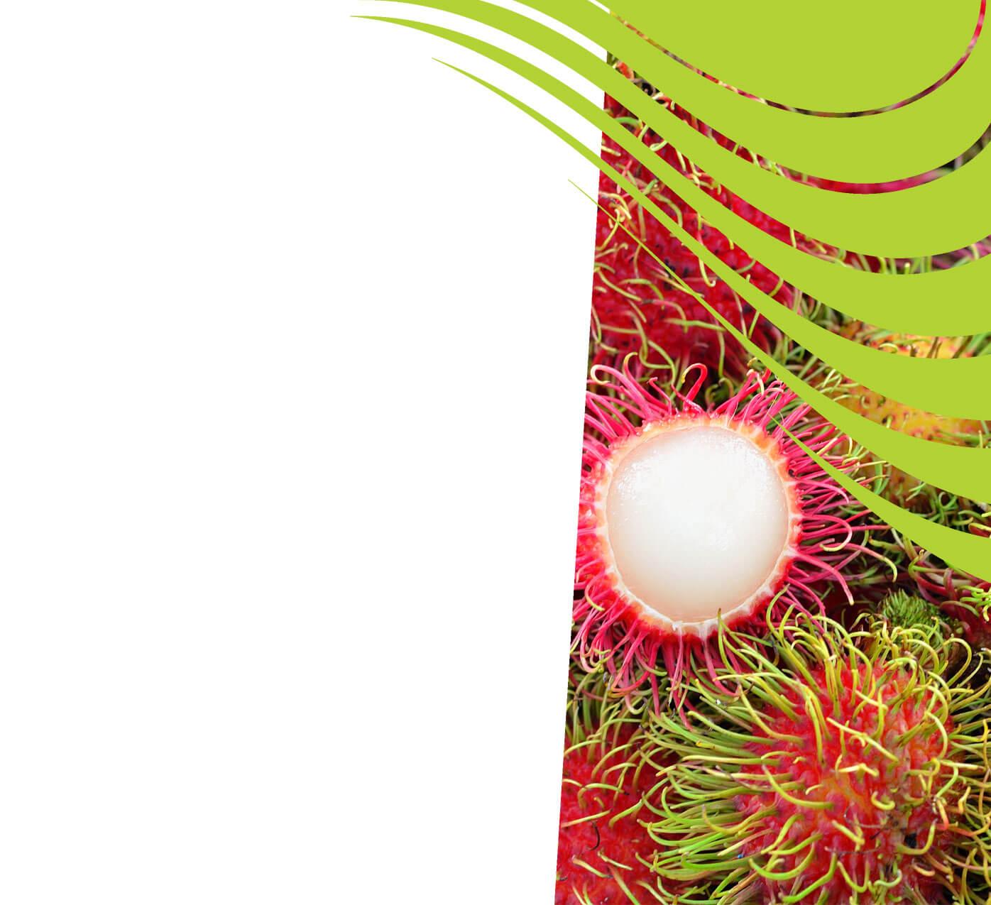 fertiliser for rambutans