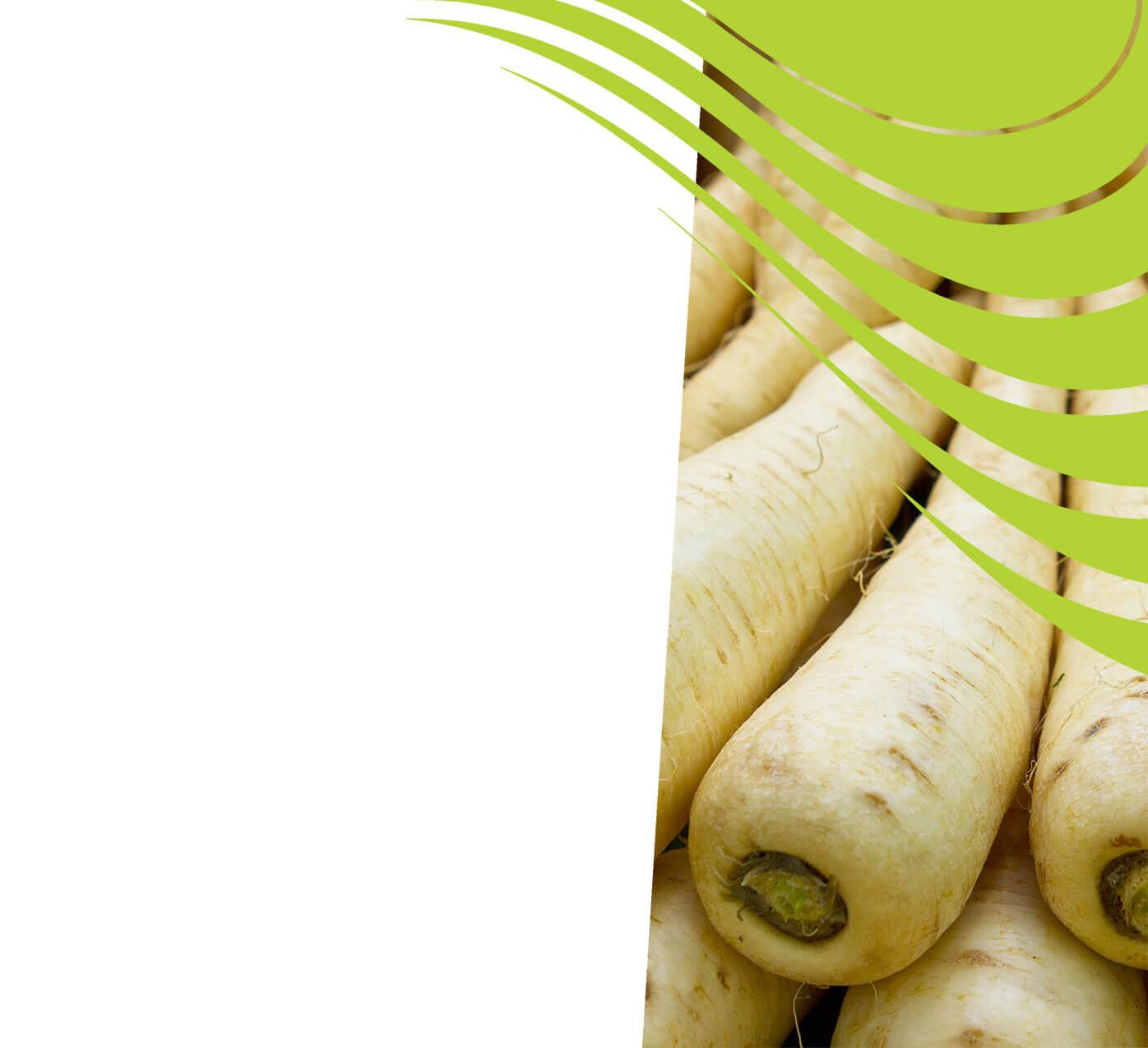 fertiliser for parsnips