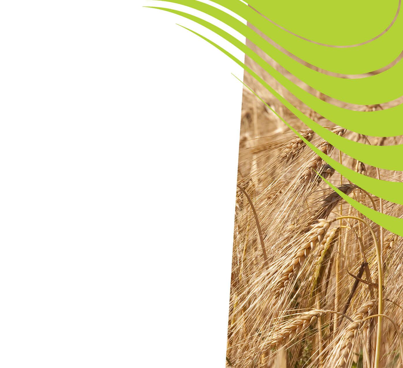 fertiliser for barley