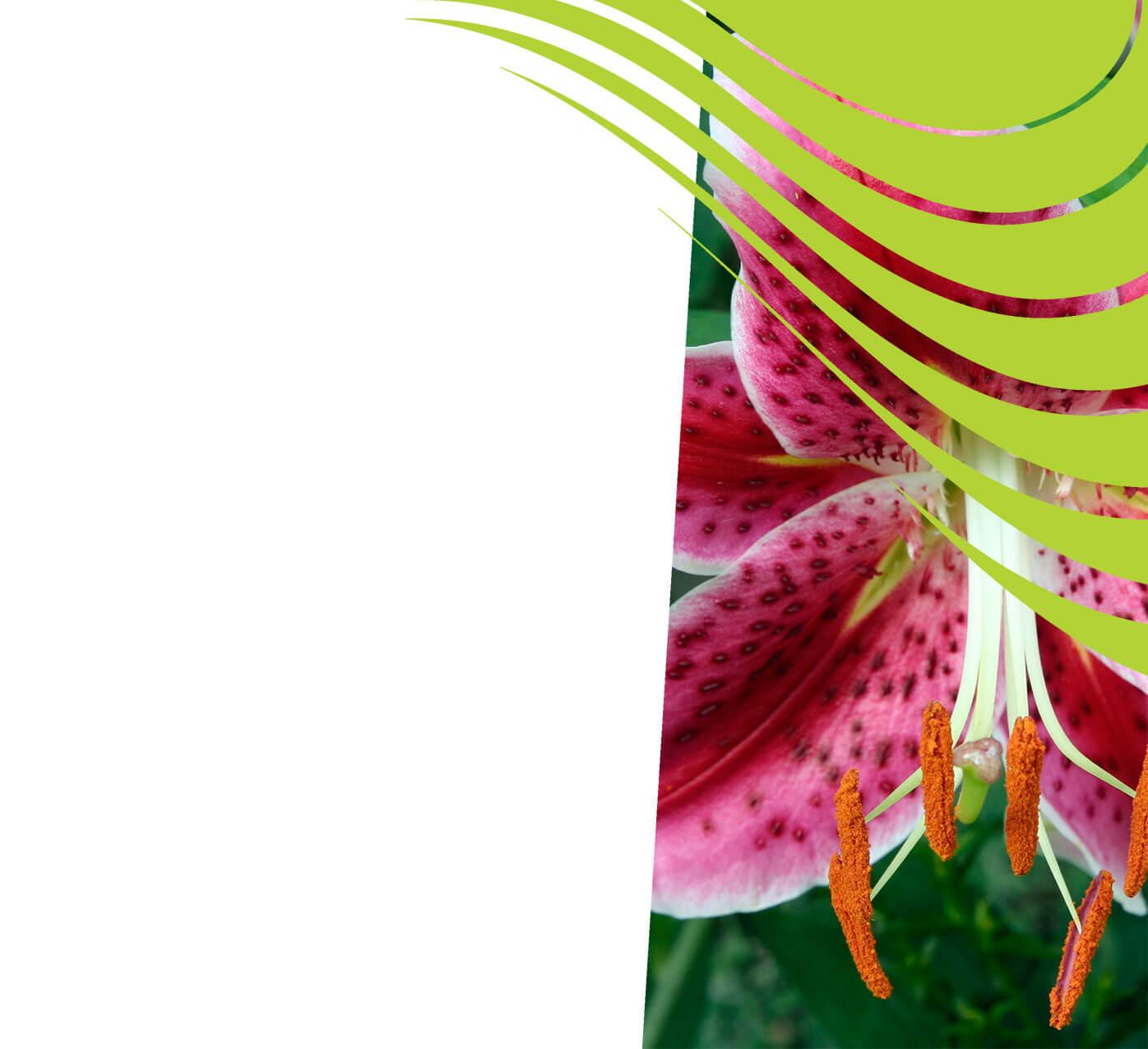 fertiliser for lilies