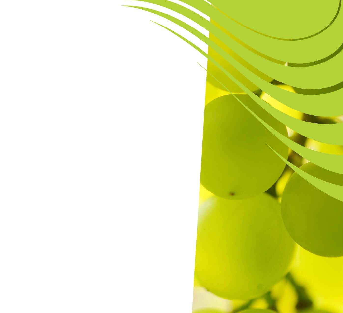 fertiliser for grapes