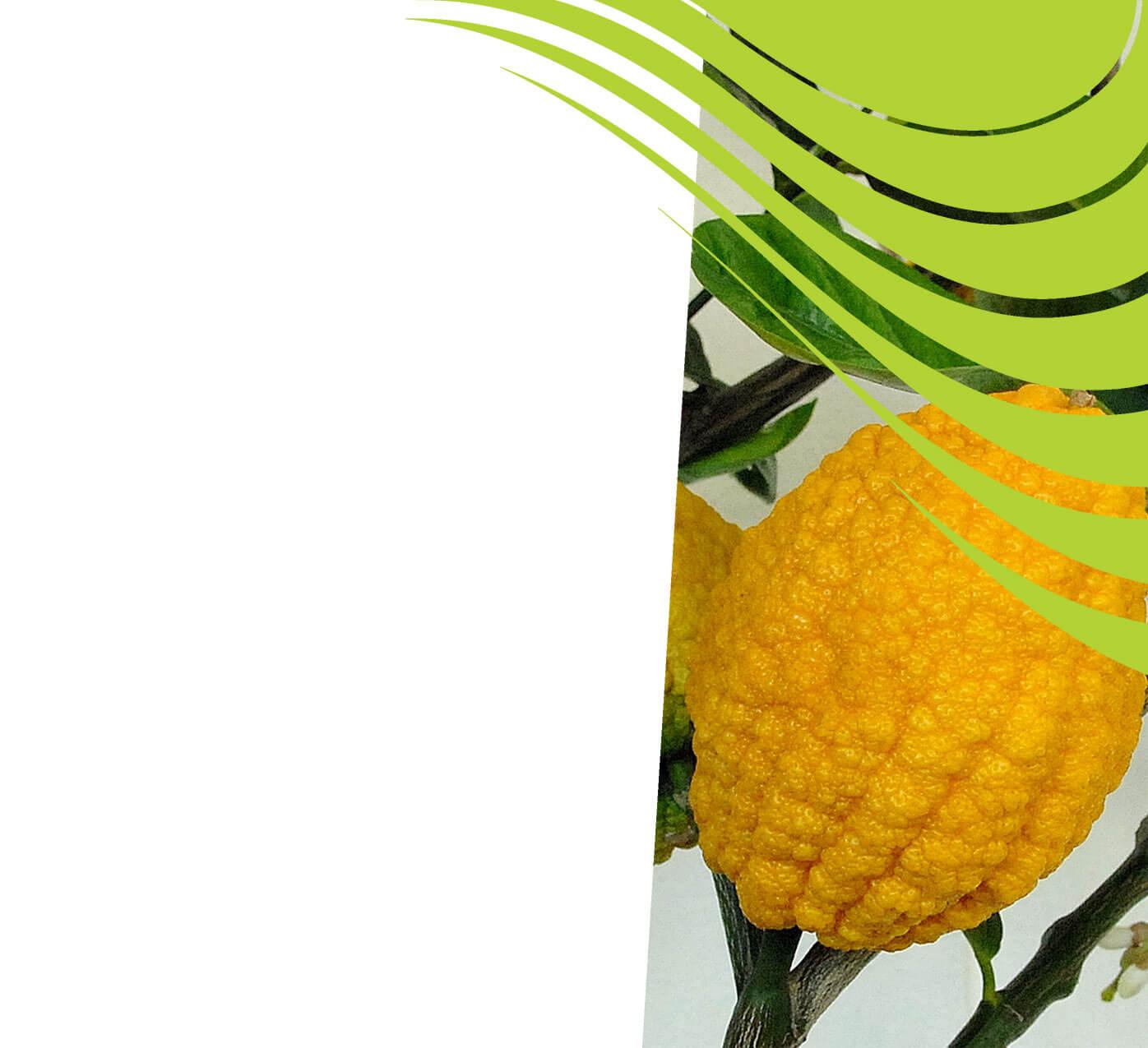 fertiliser for citrons
