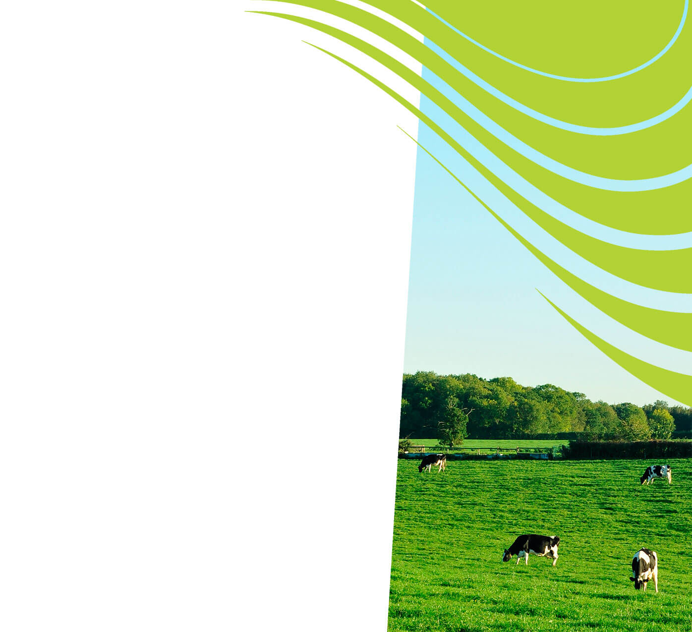 fertiliser for dairy pasture