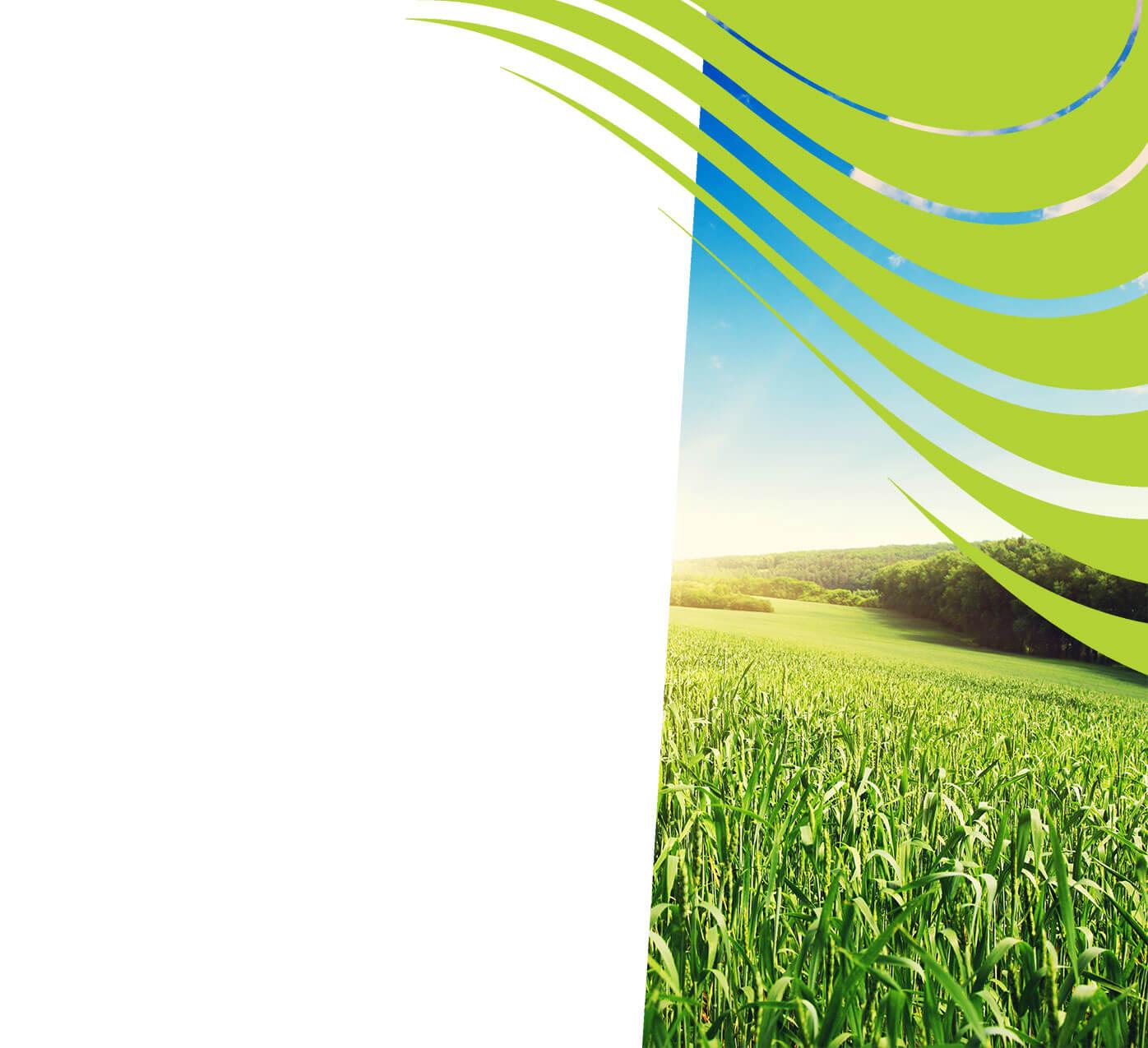 fertiliser for wheat
