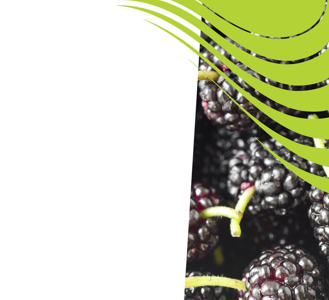 fertiliser for mulberries