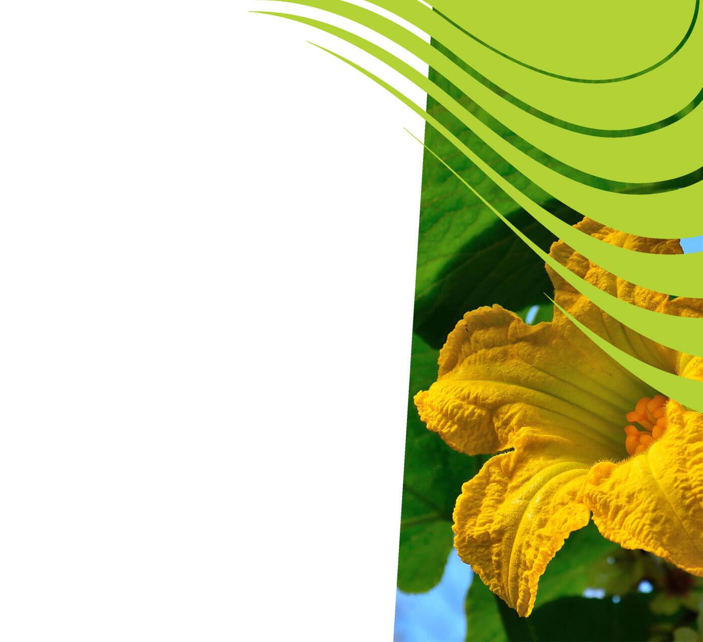fertiliser for cucurbits