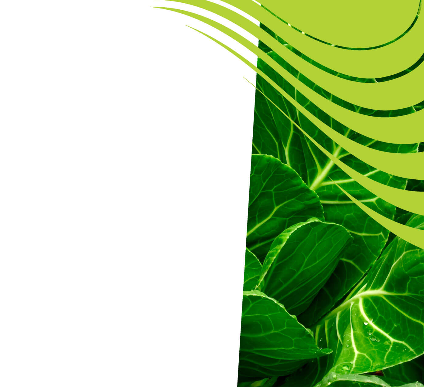 fertiliser for collard greens