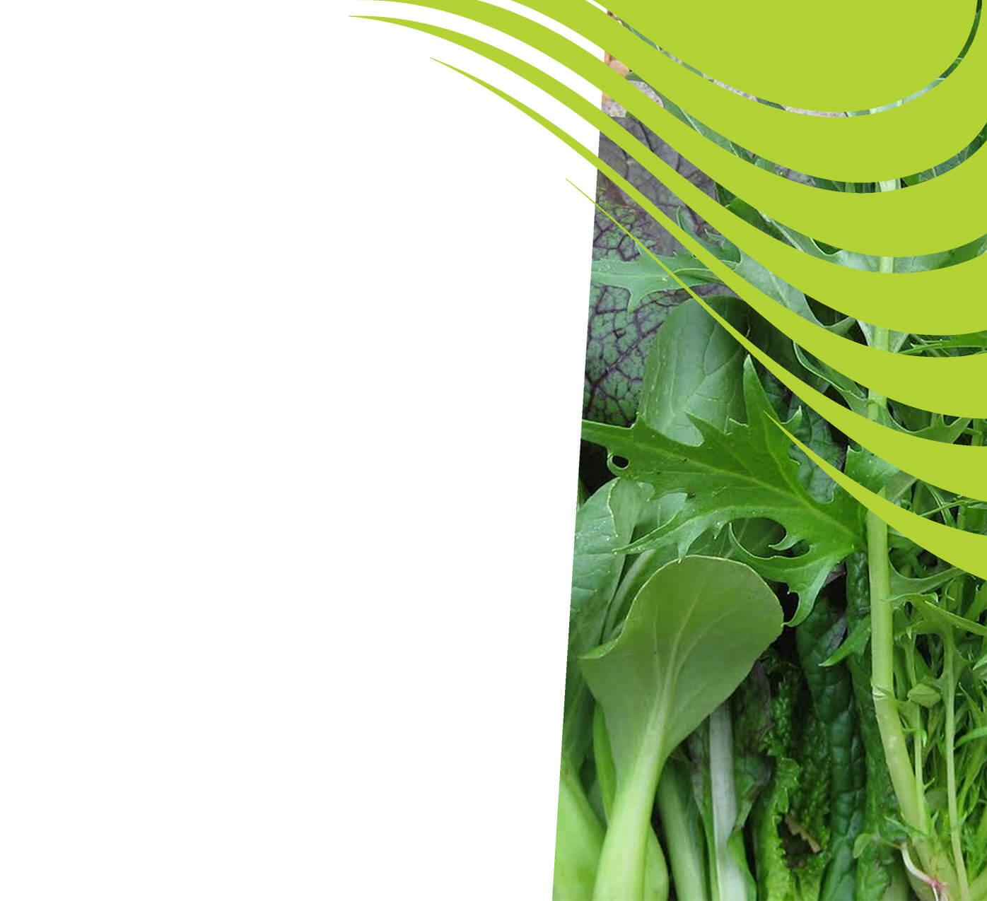 fertiliser for asian greens