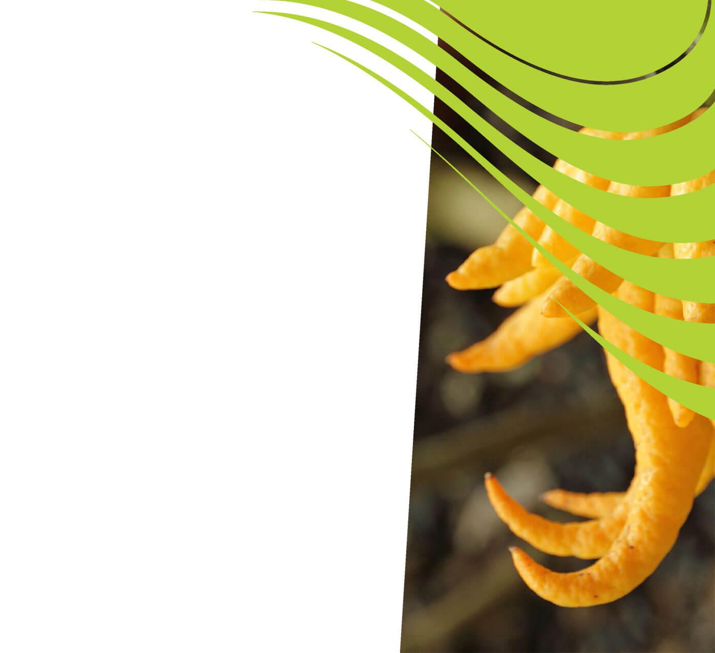 fertiliser for buddhas-hand