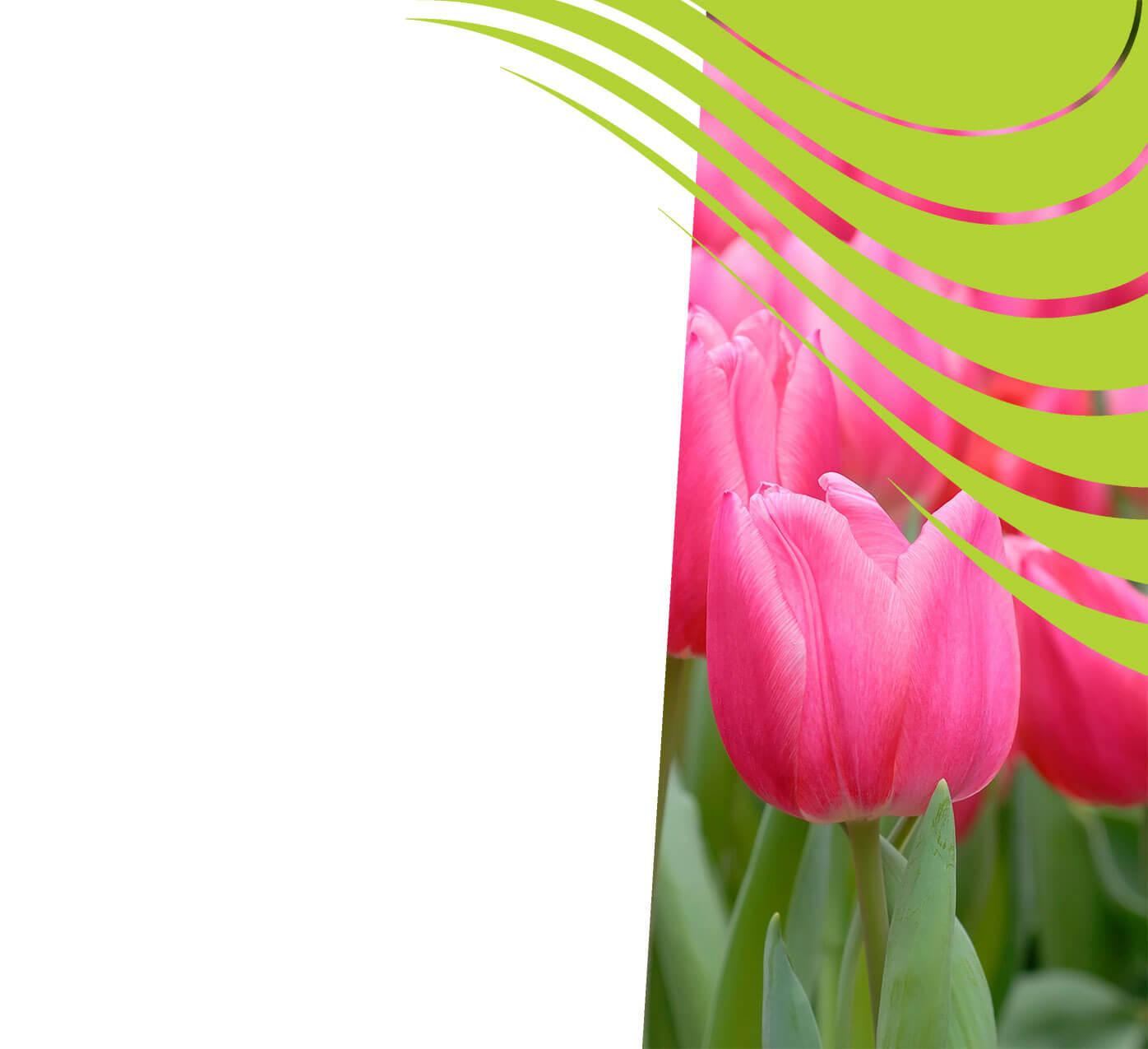 fertiliser for tulips