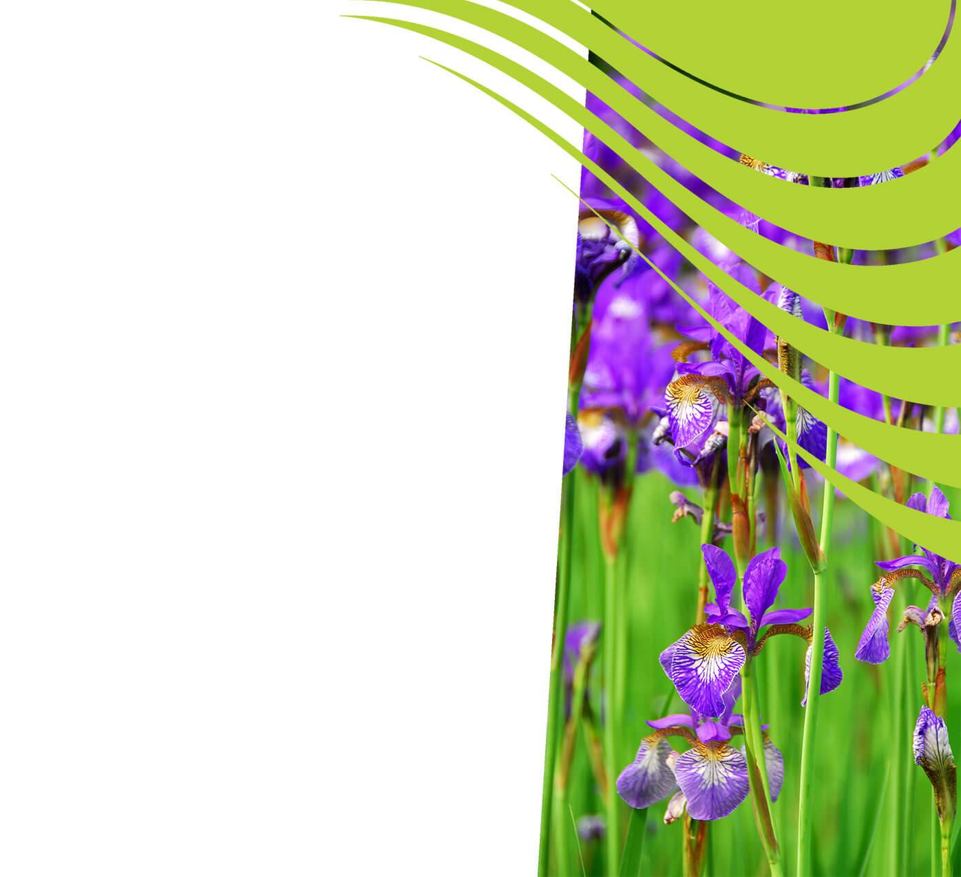 fertiliser for irises