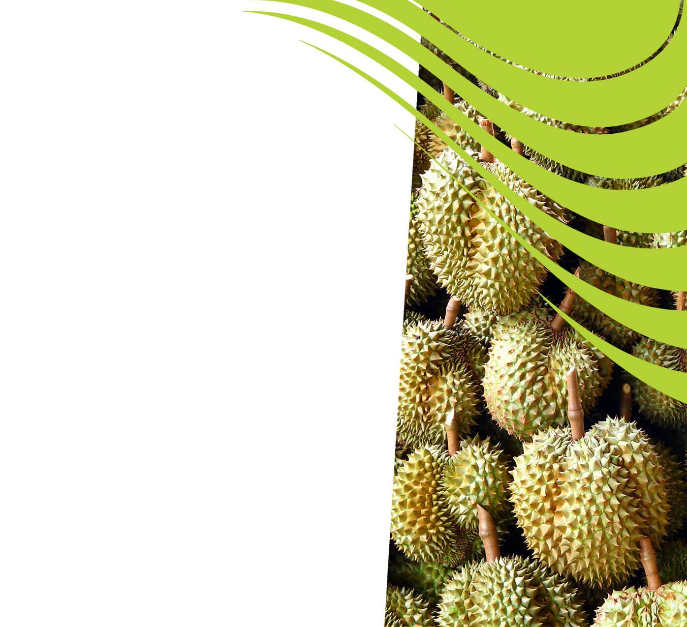 fertiliser for durian
