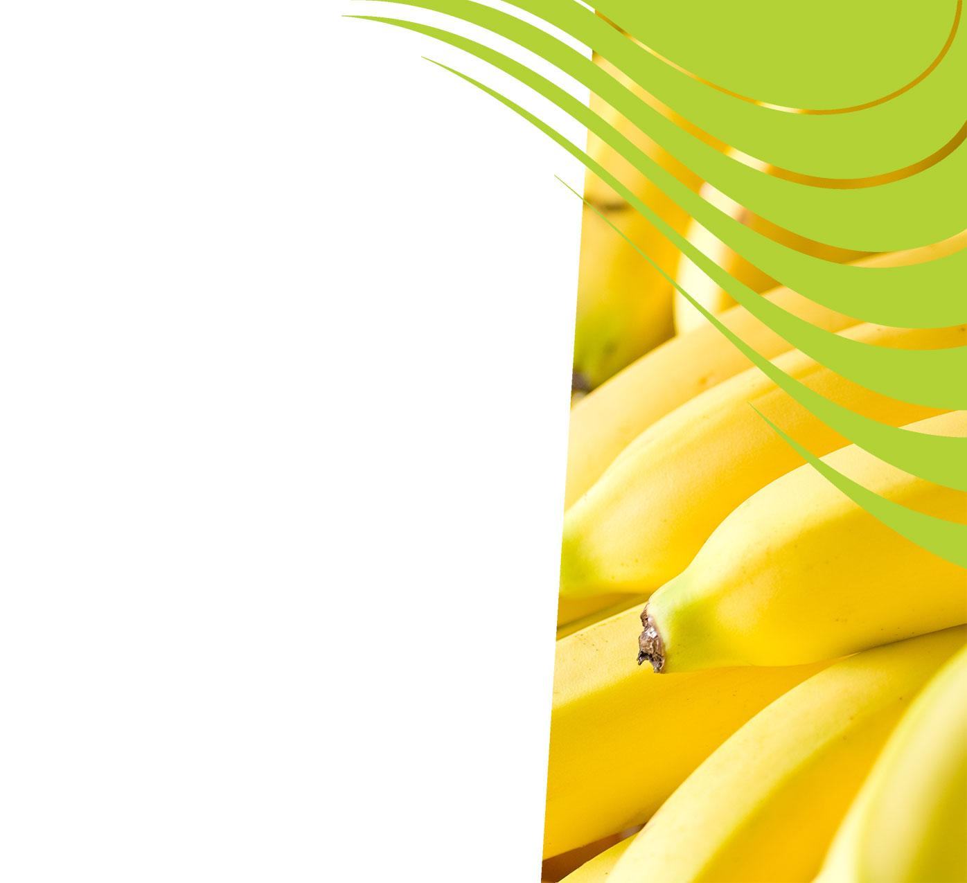 fertiliser for bananas