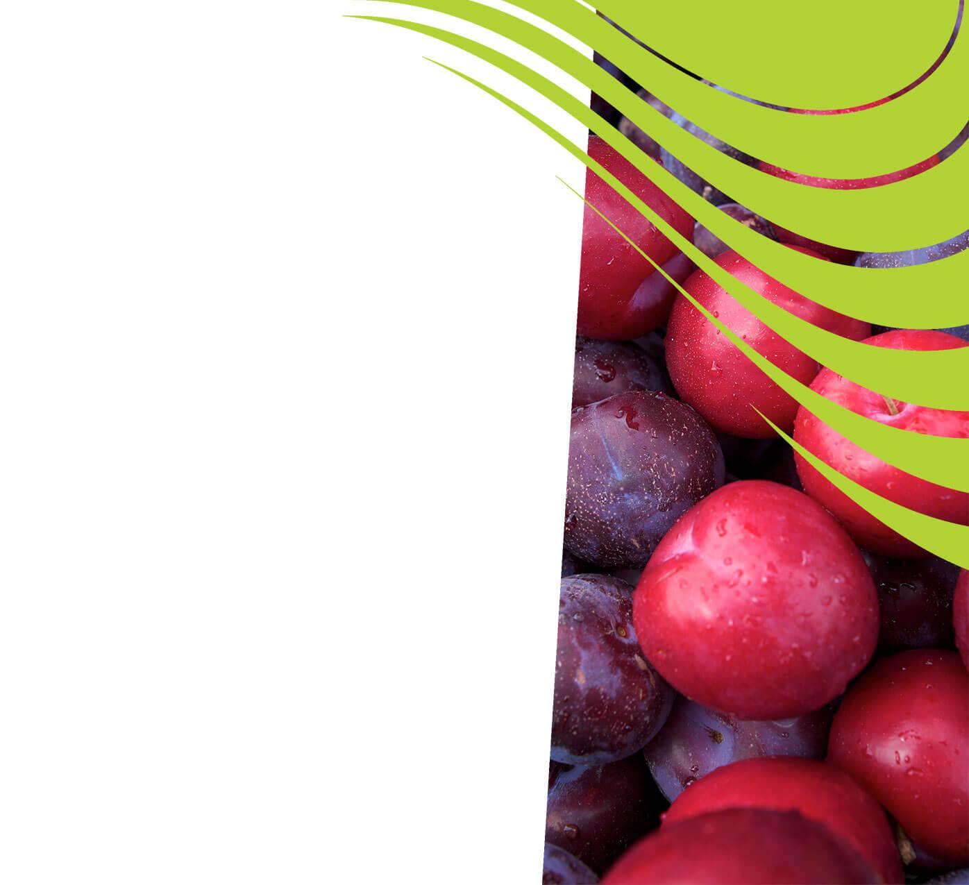 fertiliser for plums